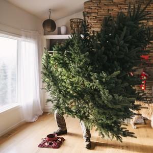 man taking down the Christmas tree