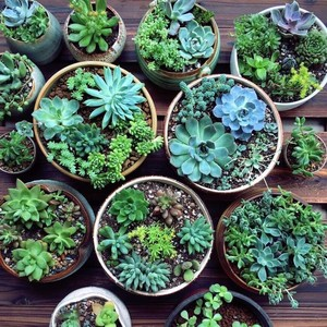 potted succulents on wooden pallet