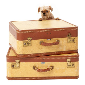 Small dog peering over stack of suitcases