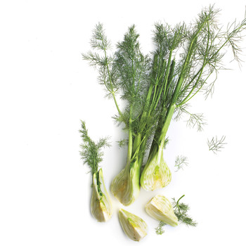 Head of fennel