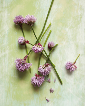 Types of Alliums