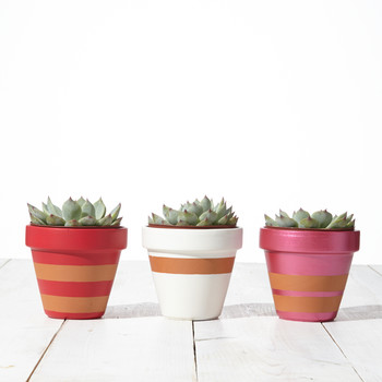 Painted-Stripe Flowerpots