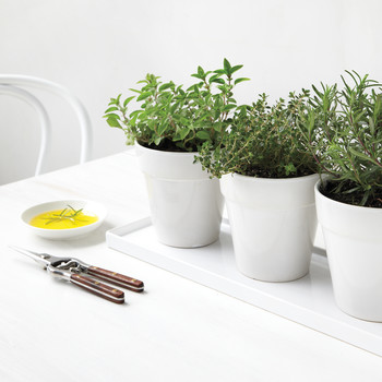 Indoor Herb Garden Tricks for the Most Lush Windowsill on the Block
