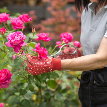 woman pruning rose bush