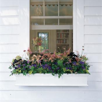 How to Arrange Gorgeous Window Boxes