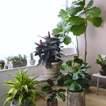 How to Determine the Right Lighting for Houseplants