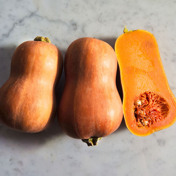 What Is Honeynut Squash, and Why Is It So Popular?
