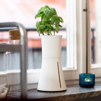 growing herbs hydroponic pot