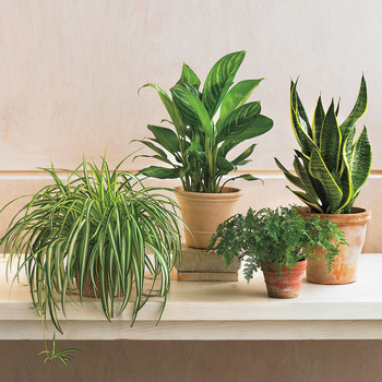 Many Millennials Are More Stressed About Their Houseplants Than a Root Canal