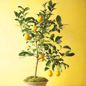 mld106783_0211_tree2.jpg