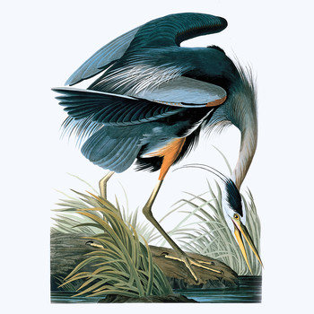 Legendary Audubon Art Can Now Be Yours