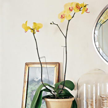 How to Correctly Prune Your Orchid—Plus, When to Do It