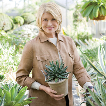 How Martha Decorates Her Bedford Home with Houseplants