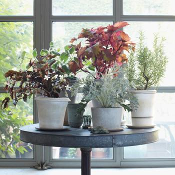 Indoor Patio Plants