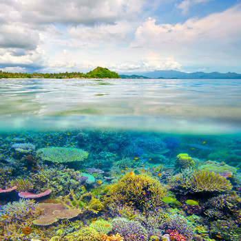 Coral Reefs in the Wild