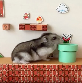 super mario bros hamster