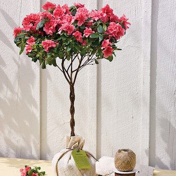 Ball and Burlap Versus Potted Trees: What's the Difference?