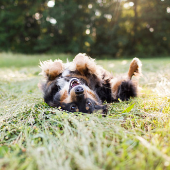 7 Tips for Keeping Your Dog Cool This Summer