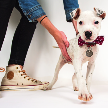The Dogist Puppies Dog with a Bowtie