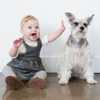 baby girl with white gray schnauzer dog
