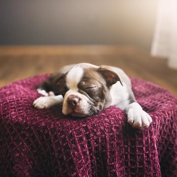 dog sleeping on blanket