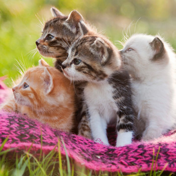 four kittens looking to the side