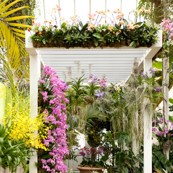 Key West Contemporary: The New York Botanical Garden's Annual Orchid Show