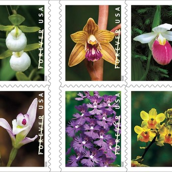 USPS orchid stamps