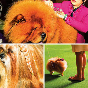 dogs at the Westminster Dog Show