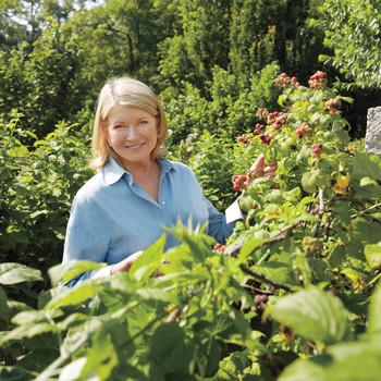 martha's berries plants