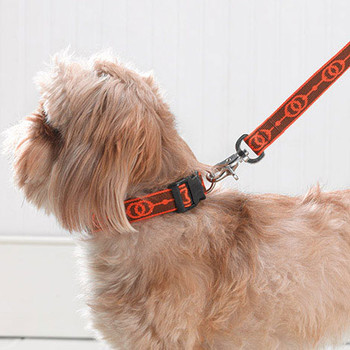 Comfortable and Stylish Pet Collars