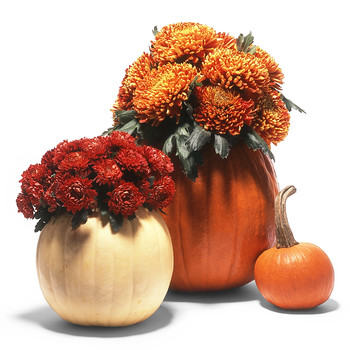 1 Pumpkin, 4 Ways to Use it as a Planter for Your Fall Flowers