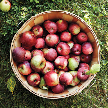 This Cider Company is Collecting Your Apples For A Good Cause