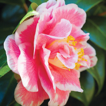 The Low-Maintenance Garden: Easy Flowering Shrubs That Sprout in the Spring