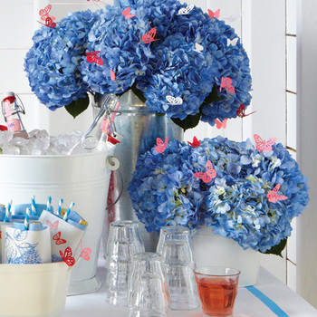 Hydrangea Care: Five Things You Didn't Know (But Should)