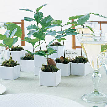 Think Green: Seedling Favors