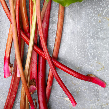 How to Grow and Harvest Rhubarb at Home