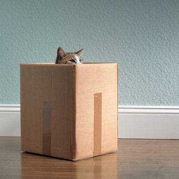Everything You Need to Know About Moving With Pets
