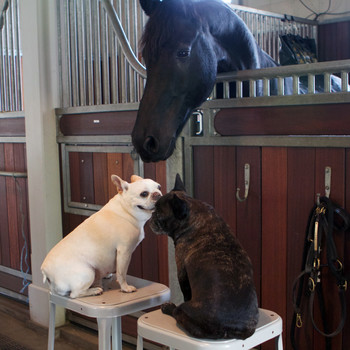Francesca and Sharkey Visit Sasa the Horse