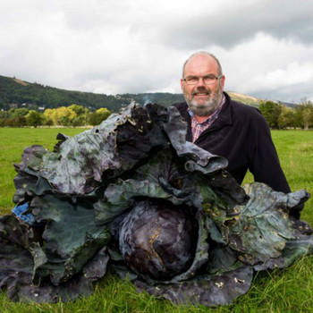 The World's Largest Red Cabbage?