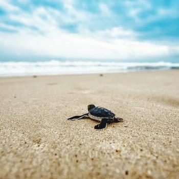 Close-Up Of Sea Turtle