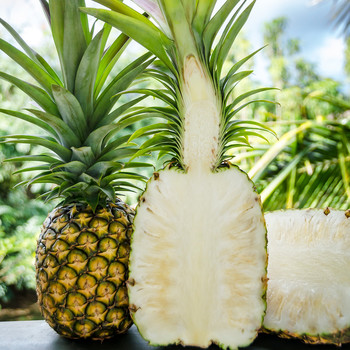 Rare White Pineapple from Hawaii