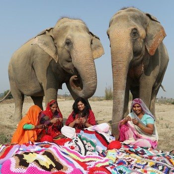 knit sweaters for rescued elephants