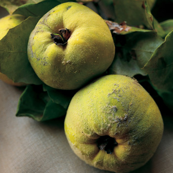 Our Favorite Recipes Featuring Quince, a Fragrant Fall Fruit