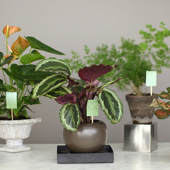 Common Houseplant Problems and How to Fix Them