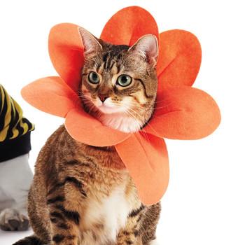 Petaled-Collar Pet Costume