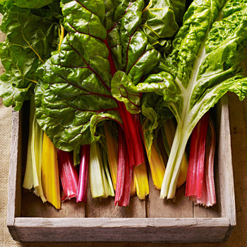 picked chard
