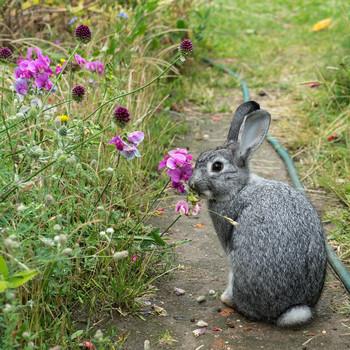 Garden Eating Flowers in a Garden