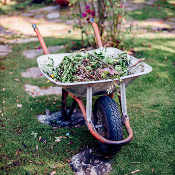 Wheelbarrow filled with branches and leaves
