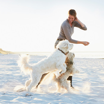 woman playing on beach with two dogs